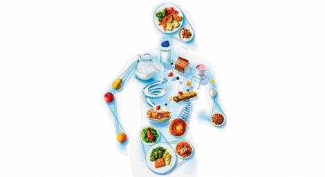 биохимическая составляющая треугольника здоровья