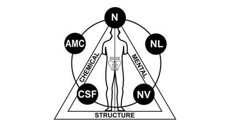 направление прикладной кинезиологии