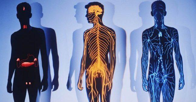 Взаимосвязи в организме человека и их значение