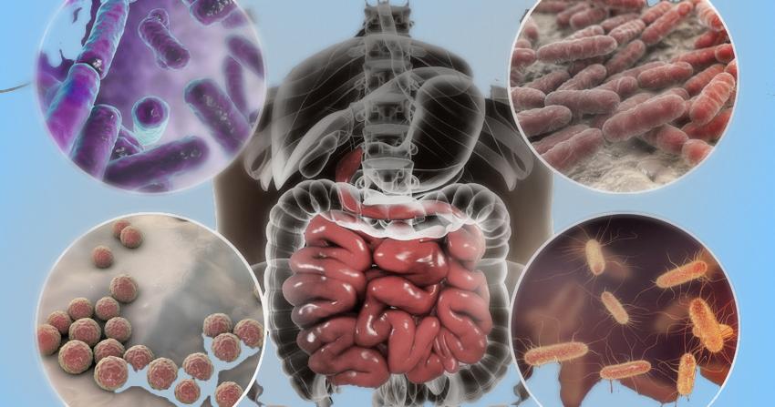 статья микробиота